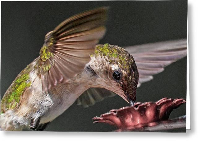 Hummingbird. Greeting Card