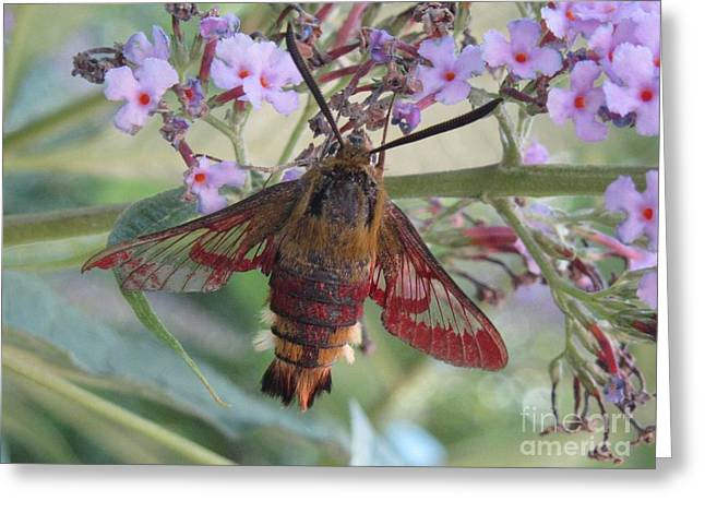 Hummingbird Butterfly Greeting Card