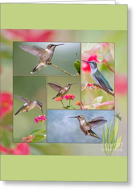 Hummingbird Collage Greeting Card by Bonnie Barry