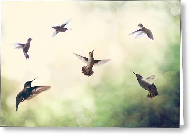Hummingbird Dance Greeting Card by Amy Tyler