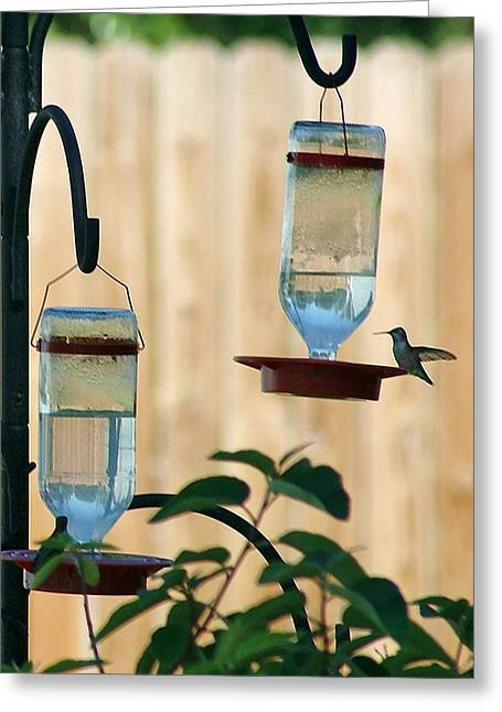 Greeting Card featuring the photograph Hummingbird Diptych Right by Ellen O'Reilly