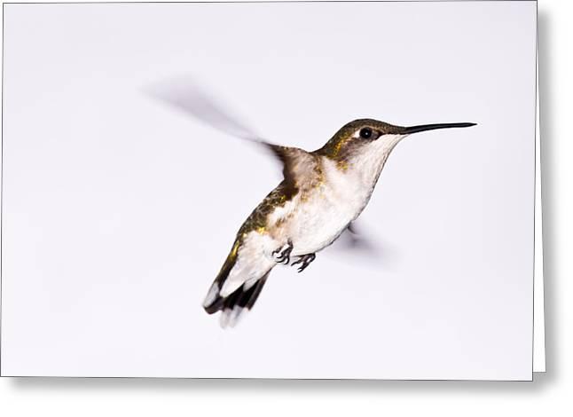Hummingbird Greeting Card by Edward Myers