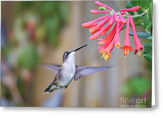 Hummingbird Happiness 2 Greeting Card by Kerri Farley
