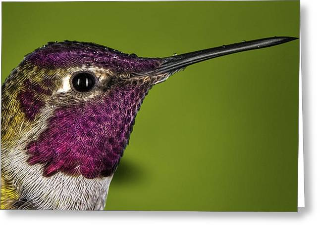 Hummingbird Head Shot With Raindrops Greeting Card