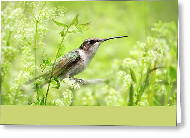 Hummingbird Hiding In Flowers Greeting Card by Christina Rollo
