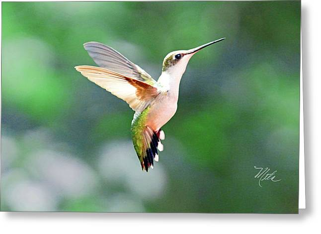 Greeting Card featuring the photograph Hummingbird Hovering by Meta Gatschenberger