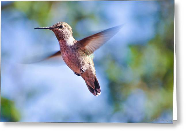 Hummingbird In Flight Greeting Card