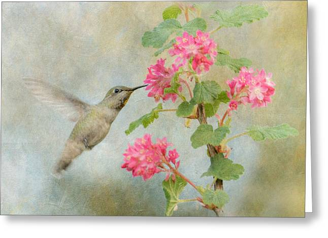 Hummingbird In Spring Greeting Card by Angie Vogel