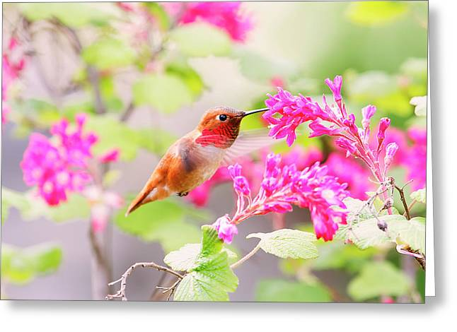 Hummingbird In Spring Greeting Card by Peggy Collins