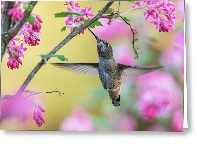 Hummingbird In The Blooms Greeting Card by Angie Vogel