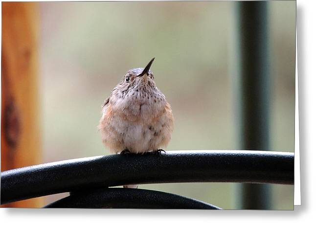 Baby Hummingbird Greeting Card
