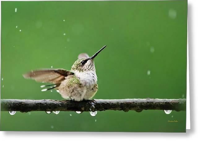 Hummingbird In The Rain Greeting Card