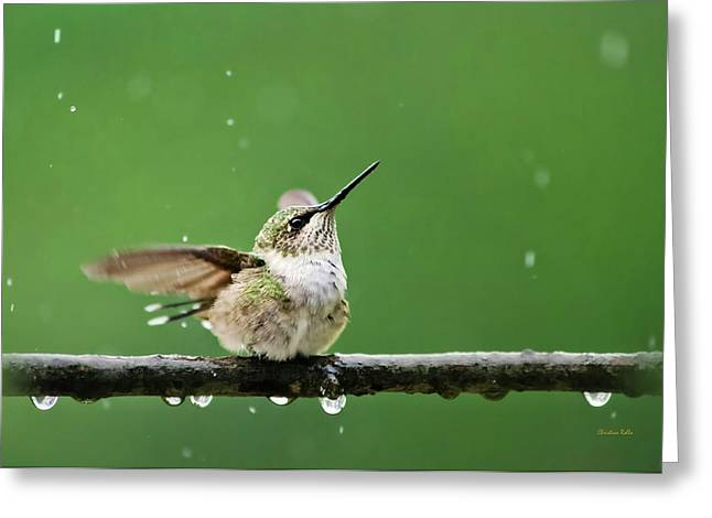 Hummingbird In The Rain Greeting Card