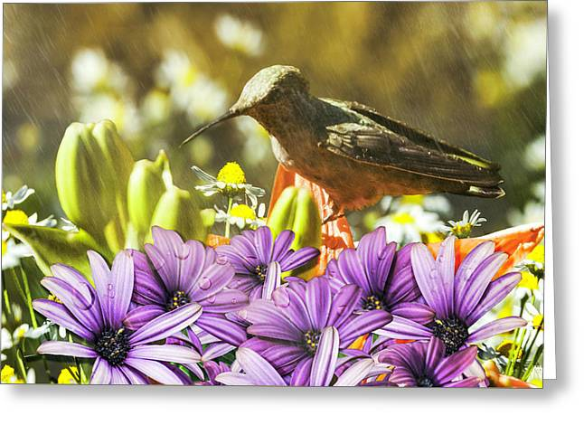 Greeting Card featuring the photograph Hummingbird In The Spring Rain by Diane Schuster