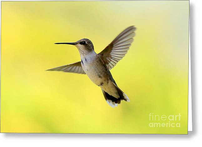 Hummingbird In Yellow Greeting Card by Carol Groenen