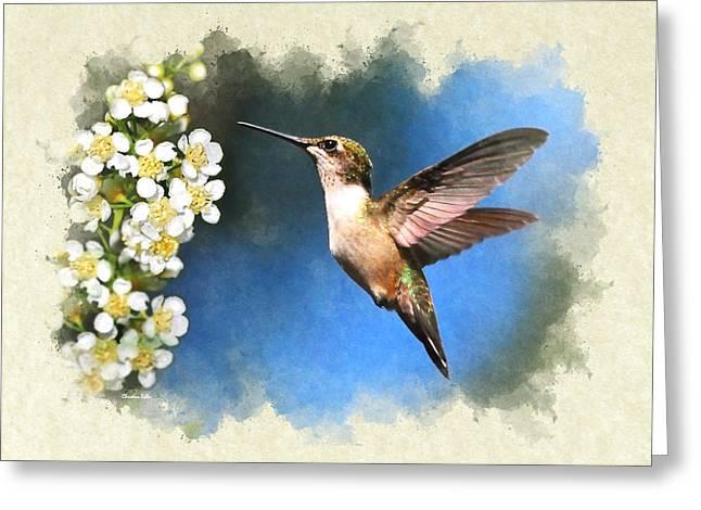 Hummingbird Just Looking Blank Note Card Greeting Card