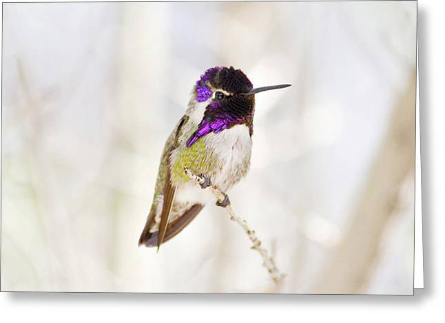 Hummingbird Larger Background Greeting Card by Rebecca Margraf