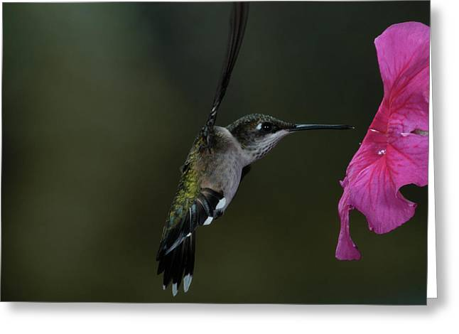 Hummingbird Greeting Card by Mike Martin