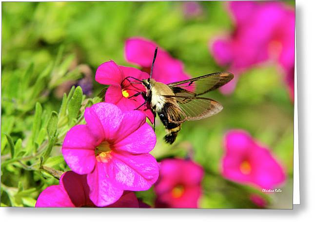Greeting Card featuring the photograph Hummingbird Moth by Christina Rollo