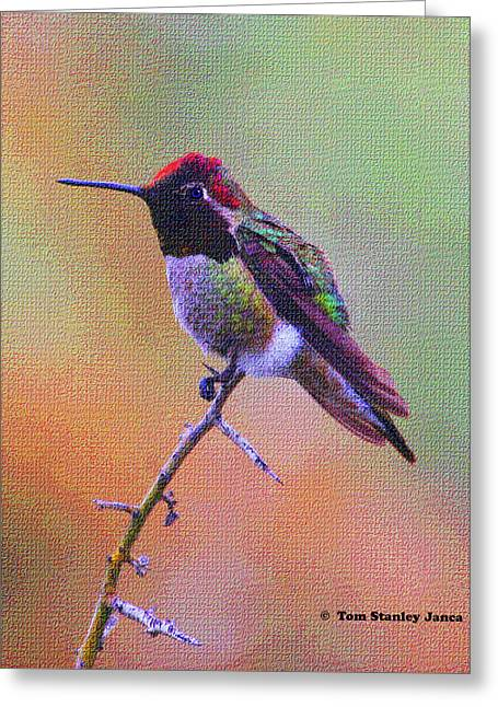 Hummingbird On A Stick Greeting Card