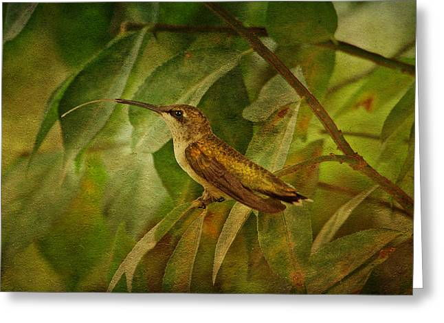Hummingbird On Branch Greeting Card by Sandy Keeton