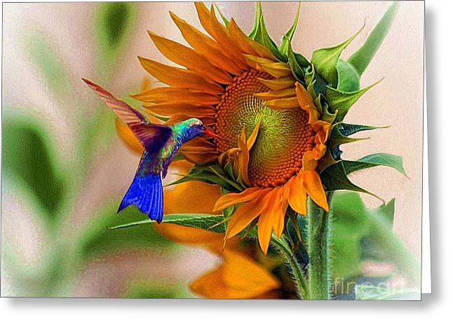 Hummingbird On Sunflower Greeting Card by John  Kolenberg