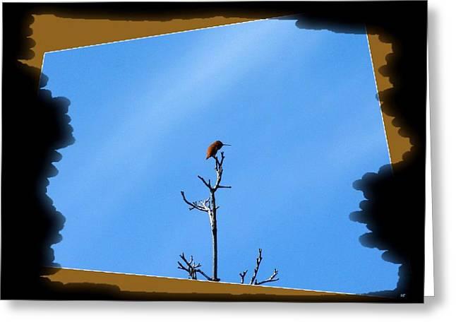 Hummingbird Optical Zoom Greeting Card