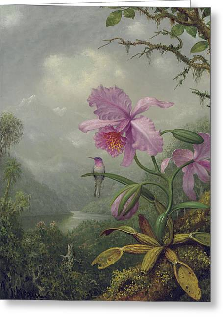 Hummingbird Perched On An Orchid Plant Greeting Card by Martin Johnson Heade