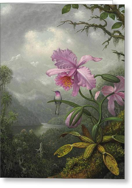 Hummingbird Perched On The Orchid Plant Greeting Card by Martin Johnson Heade