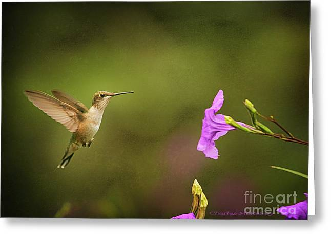 Greeting Card featuring the photograph Hummingbird Pink Flower by Charles McKelroy