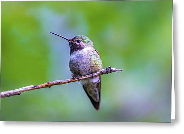 Hummingbird Portrait Greeting Card