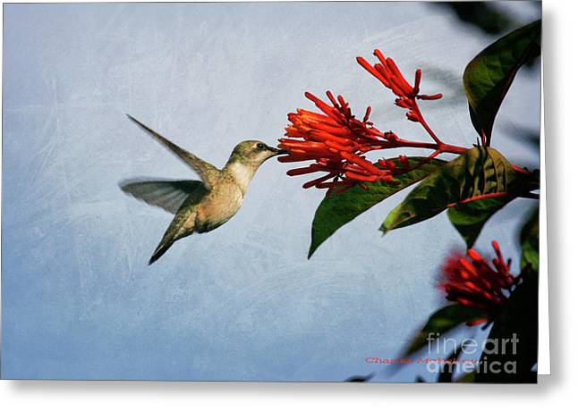 Hummingbird Red Flowers Greeting Card
