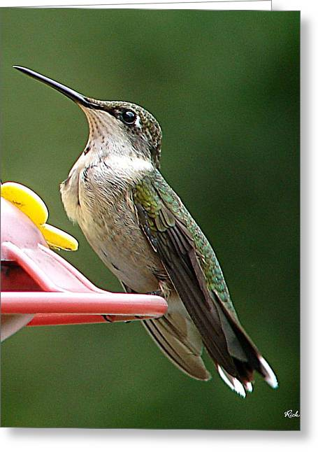 Greeting Card featuring the photograph Hummingbird by Rick Friedle