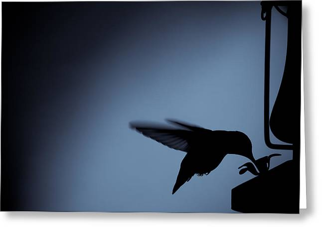 Hummingbird Silhouette Greeting Card by Edward Myers