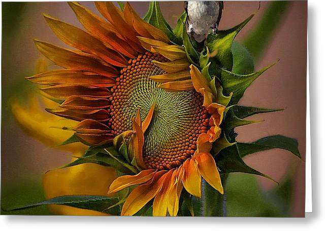 Hummingbird Sitting On Top Of The Sun Greeting Card by John  Kolenberg
