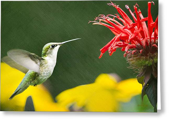 Hummingbird Snack Greeting Card by Christina Rollo
