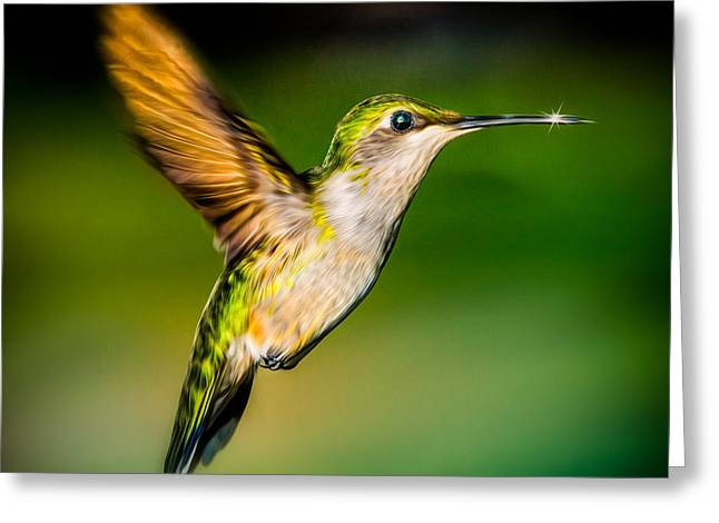 Hummingbird Sparkle Greeting Card