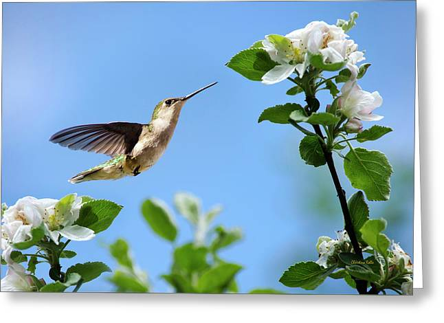 Hummingbird Springtime Greeting Card by Christina Rollo