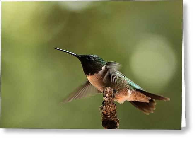 Hummingbird Take-off Greeting Card
