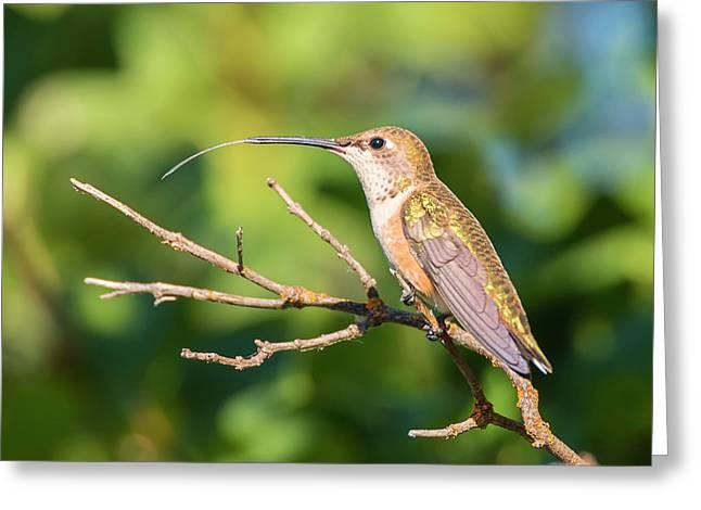 Hummingbird Tongue Greeting Card