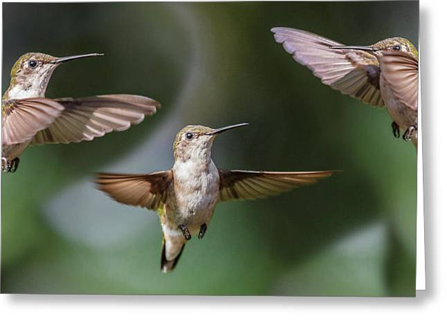 Hummingbird Trio Greeting Card