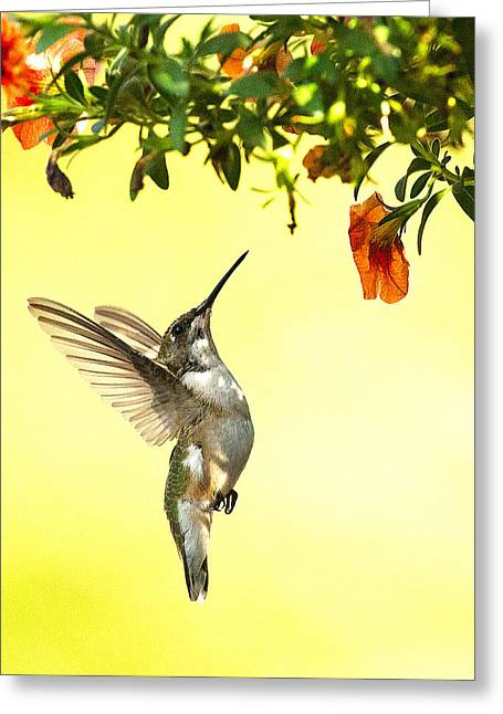 Hummingbird Under The Floral Canopy Greeting Card