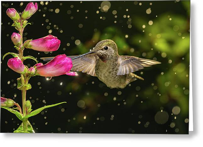 Greeting Card featuring the photograph Hummingbird Visits Flowers In Raining Day by William Lee
