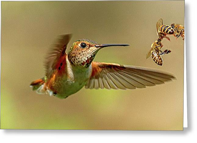 Hummingbird Vs. Bees Greeting Card