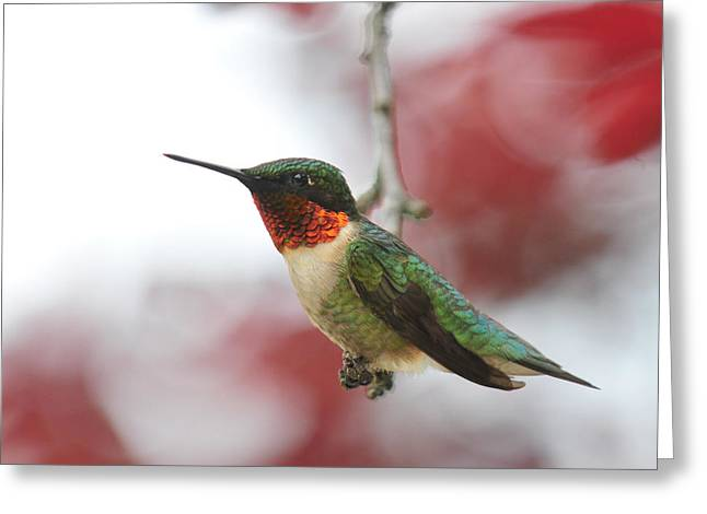 Greeting Card featuring the photograph Hummingbird Watch Tower by Lara Ellis