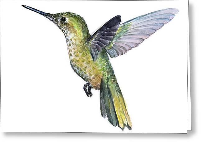 Hummingbird Watercolor Illustration Greeting Card by Olga Shvartsur