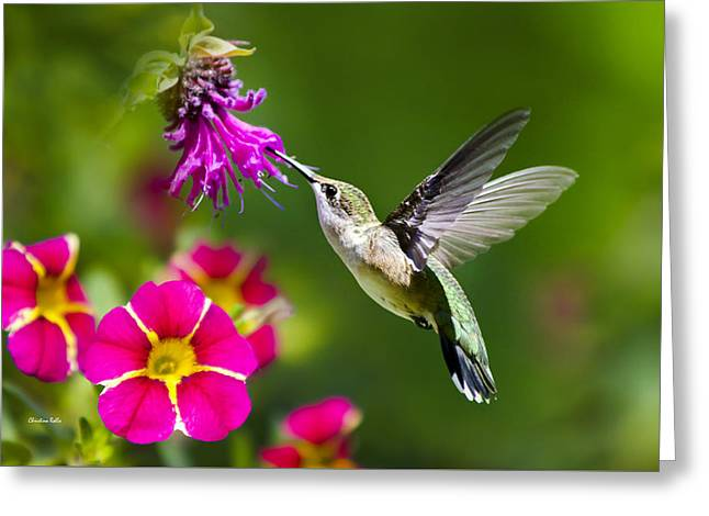 Hummingbird With Flower Greeting Card by Christina Rollo