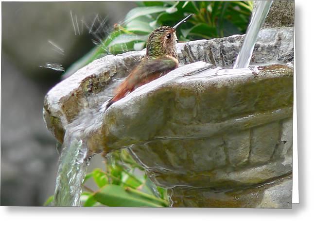 Hummingbirds Do Take Baths Greeting Card