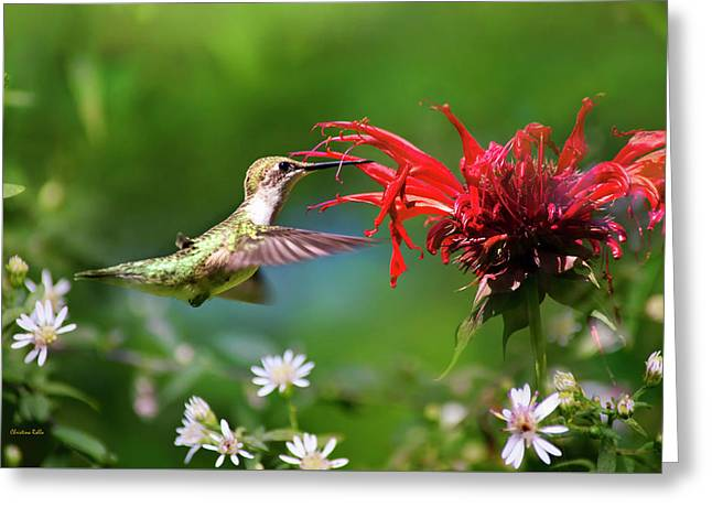 Hummingbird's Savory Summer Greeting Card by Christina Rollo