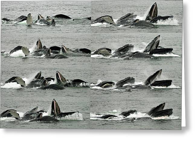 Humpback Whale Bubble-net Feeding Sequence X8 Greeting Card